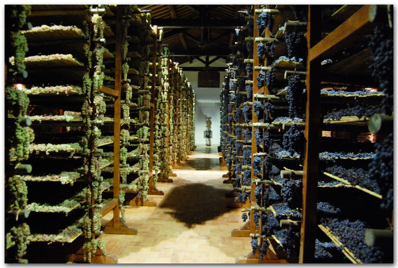 The grape drying room in the Avignonesi winery
