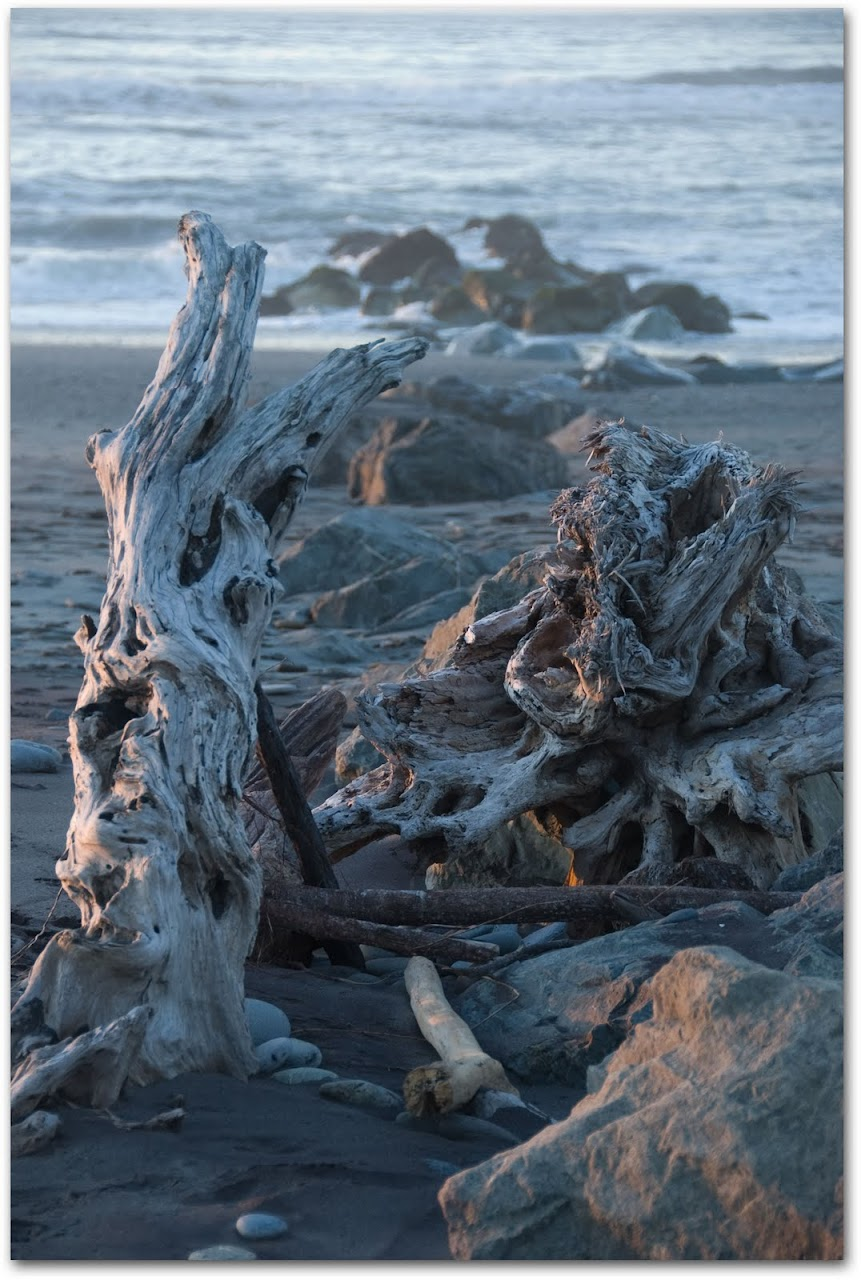 Driftwood at Hokitika beach