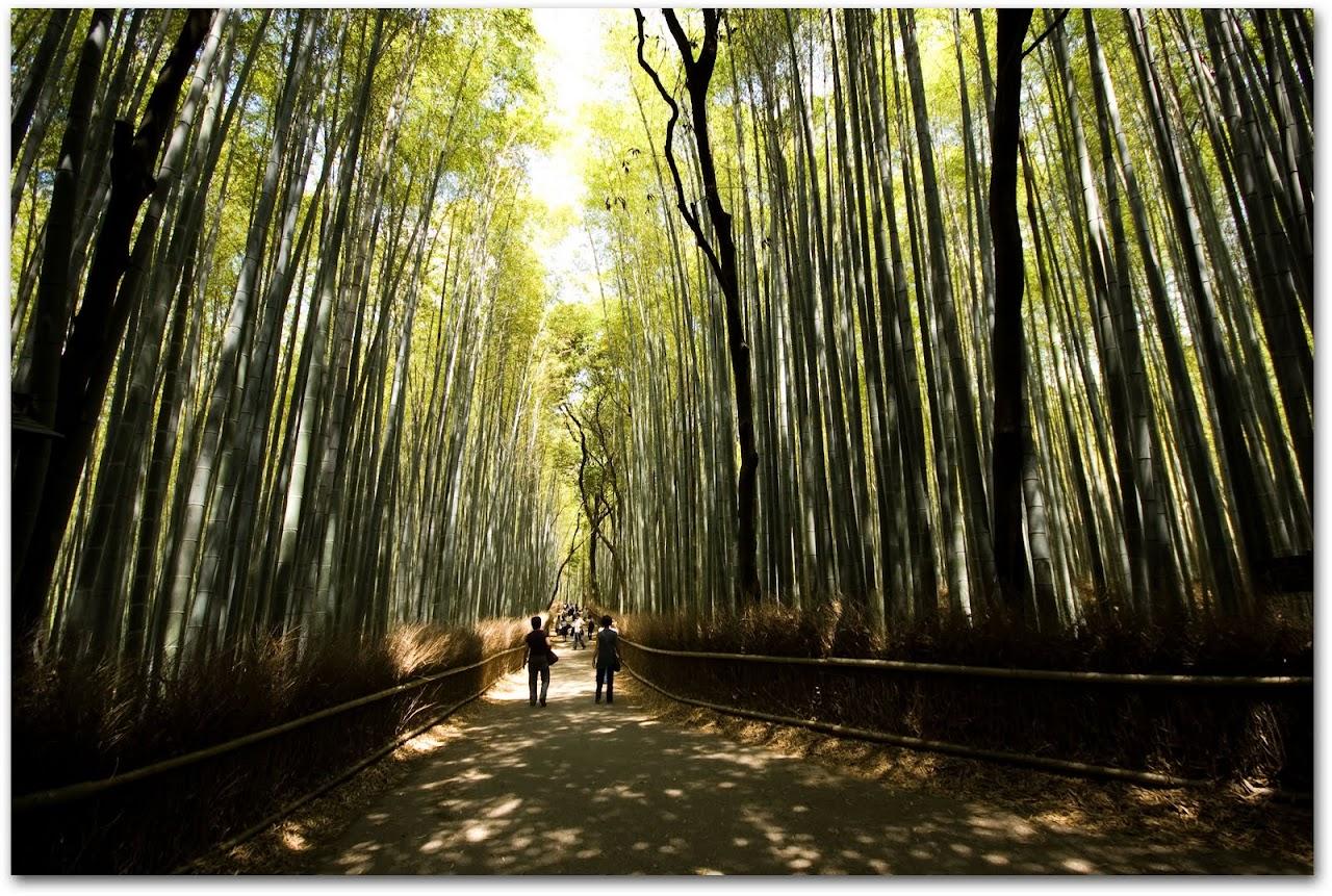 Bamboo path Kyoto Arashiyama