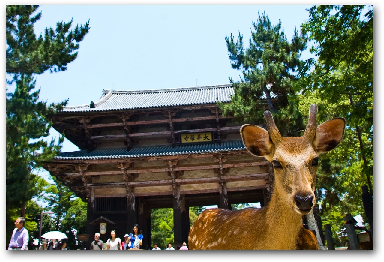 Deer at temple