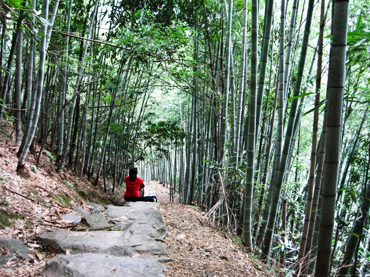 Sitting in bamboo at Huang Shan