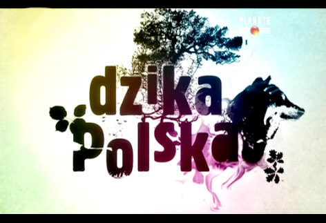 Dzika Polska (2009) PL.TVRip.XviD