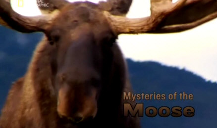 Sekrety �osia / Mysteries of the Moose (2007) PL.TVRip.XviD / Lektor PL