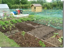 Peggy's allotment