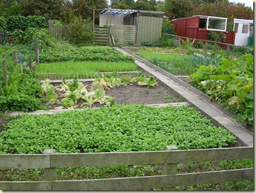 Danish seedsavers garden