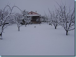 2009 01 03 Νάουσα Χιονόπτωση_009