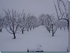 2009 01 03 Νάουσα Χιονόπτωση_013