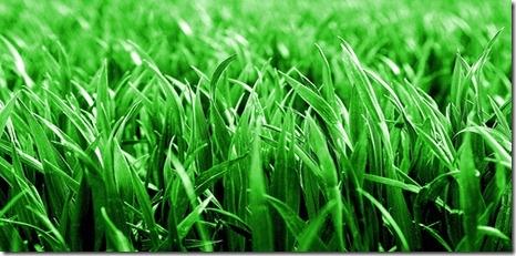 [grass stain.jpg]