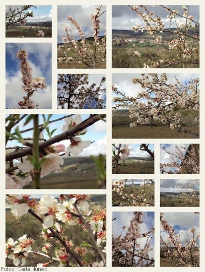 Quadro com fotos de amendoeiras em flor em Castelo Branco Mogadouro