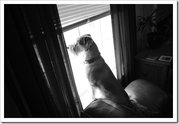 "Sadie Belle sits in this window and ""hunts"" squirrles in our backyard.  This photo was taken by our talented friend and dog-lover Beverly."
