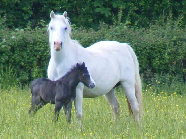 Angel and Foal June 2009