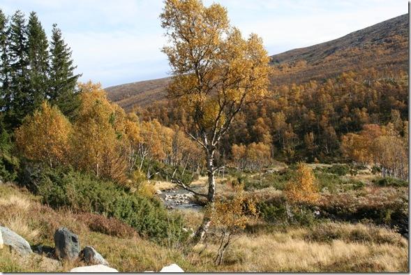 Høst (1140 x 760)