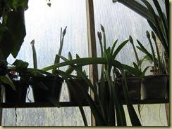 Greenhouse 3.04.10 002