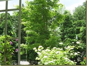 Garden 6.14.09 008