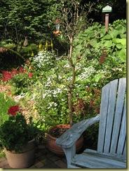 Garden late june 2010 001