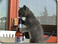 BeerCat07
