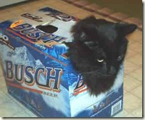 BeerCat03.jpg