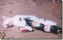 BeerCat08