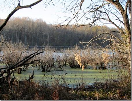 Swamp - Beaver Dam State Park