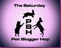 pet-blogger-hop-pink-copy