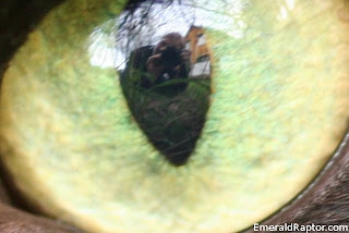 Jeg i tar bilde av øyet til en katt