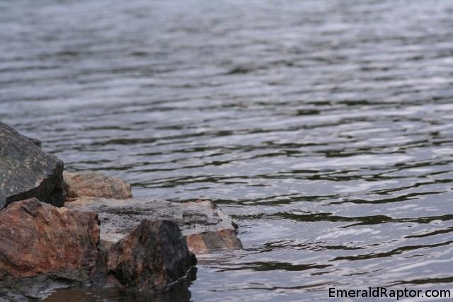 Bølger i vannet