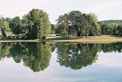 trees and lake reflection