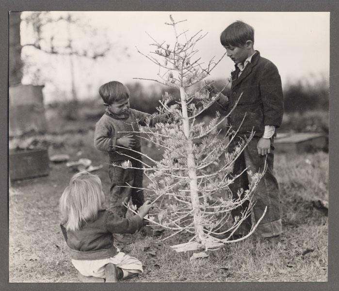 Christmas Tree In Rockefeller