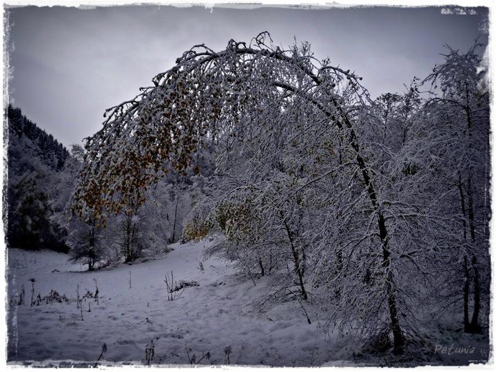 Snø 4