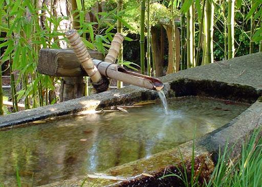 бамбук 1