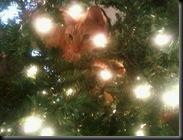 Tucker's first Christmas Tree