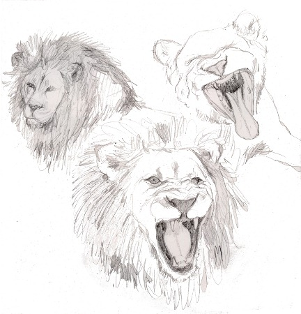 24 Feb 2011 - Lions1