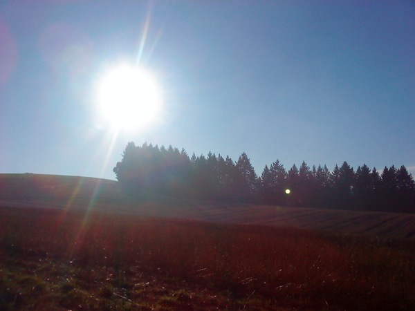 sunny spring field w/wood smoke