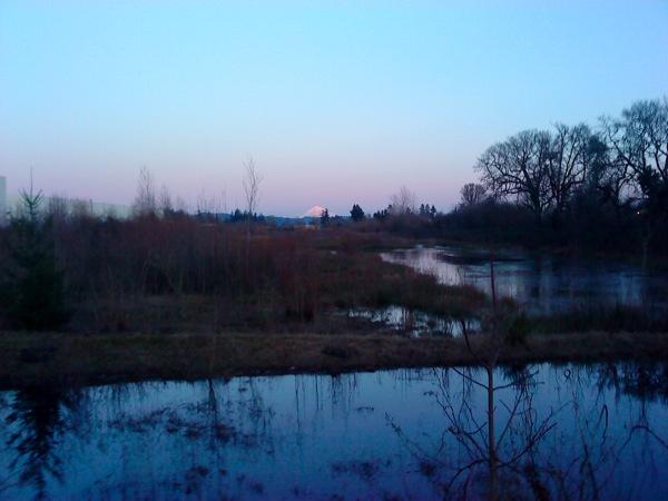 Mt. Hood over marsh near sunset
