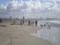 Dog Beach 020809.JPG