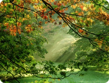 mark-bolton-woodland-garden-westonbirt-arboretum-gloucestershire