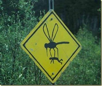 el-dia-en-que-los-mosquitos-tomaron