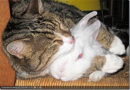 a-cat-hug-a-bunny-19504-1241619416-10-1