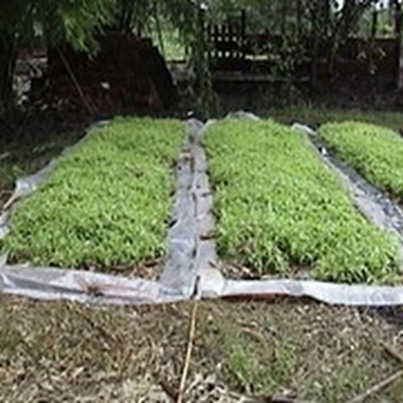 Que es el Forraje verde hidropónico (FVH).