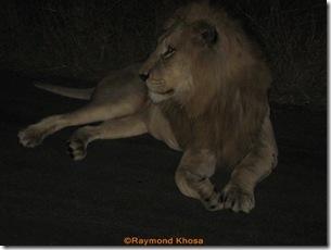 Africa 007