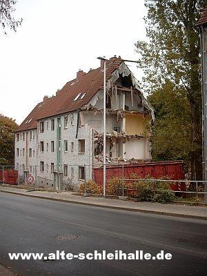 Schleswig Husumer Baum
