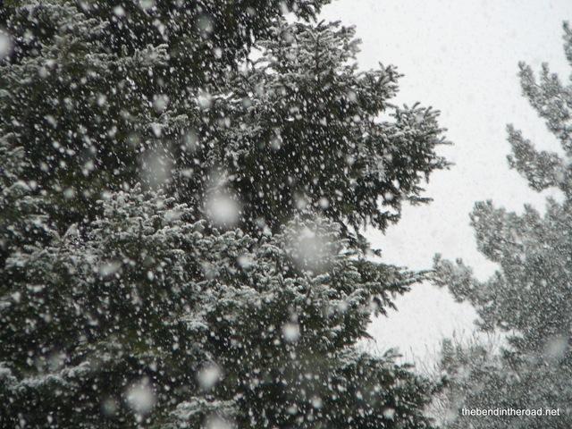 [february snowflakes[4].jpg]
