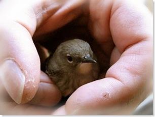 birdie in the hand 2