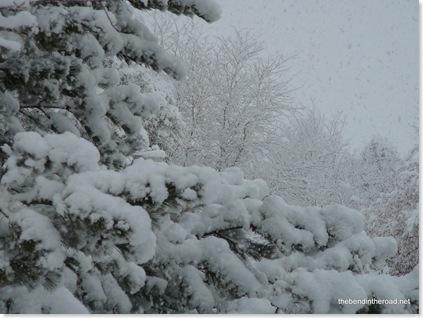 Snowy Christmas 2008