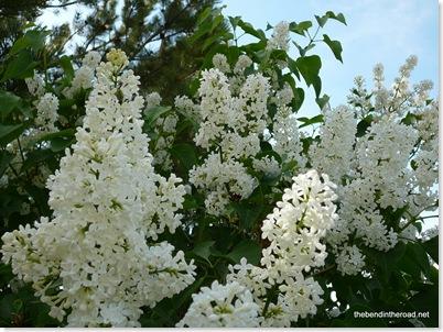 I love lilac's perfume