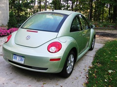 green beetle back
