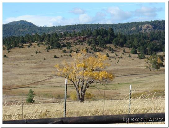 10-22-10 to Taos 33