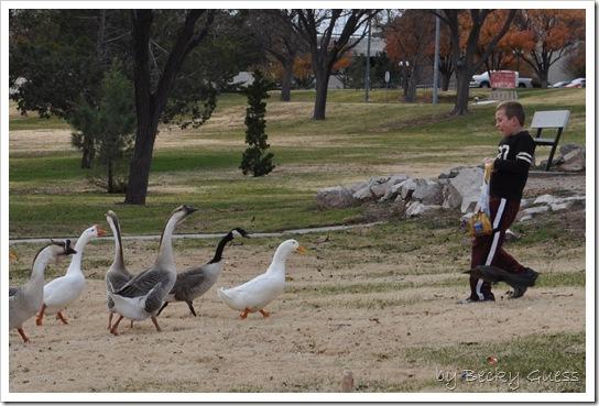 11-24-10 Feeding geese 05