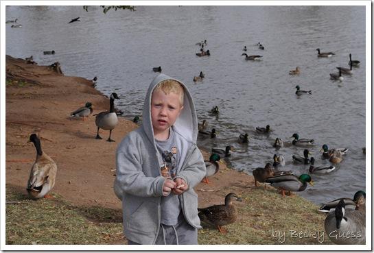 11-24-10 Feeding geese 18