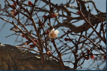 03-13-11 blooming 20